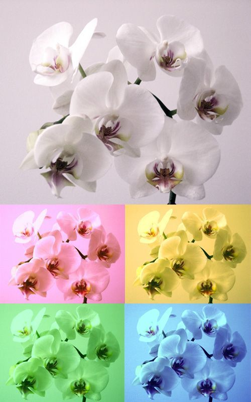 Orquideas | Decoración de Interiores